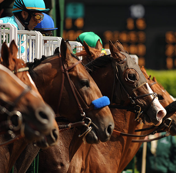 horses lined up at the kentucky derby